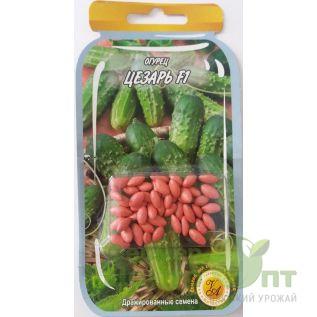 Дражированные семена Огурец Цезарь F1, сверхранний, 45-55 шт. (L A)