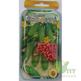 Дражированные семена Огурец Верные Друзья F1, ультраскороспелый, 45-55 шт. (L A)